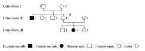 Arbre généalogique et risque de transmission capture-decran-2013-11-06-a-19.25.16-300x106