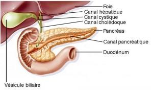 pancreas5-300x180