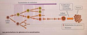 La cancérisation processus-k-300x122